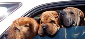 αντιμετώπιση ναυτίας σκύλων
