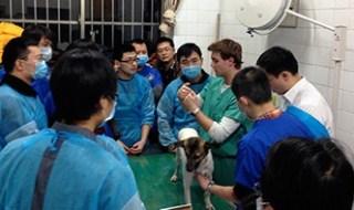 china veterinary students