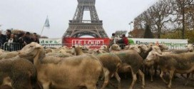 moutons tour eifel
