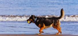 αισιόδοξοι σκύλοι