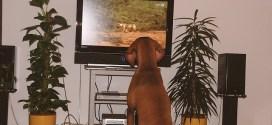 Τηλεόραση για σκύλους