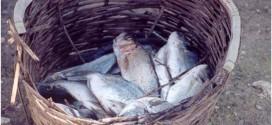 βιο ψαρι (2)