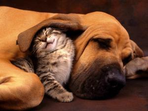 Εθνική ημέρα αγάπης ζώων συντροφιάς 300