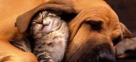Εθνική ημέρα αγάπης ζώων συντροφιάς slider