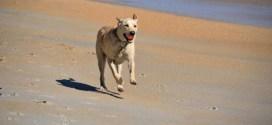 παυσίπονα στην οστεοαρθρίτιδα σκύλων slider