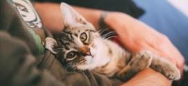 Fαγχολυτικές ιδιότητες της γάτας 1otolia_75544998_XS-1slider