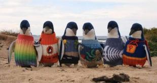 πουλόβερ για πιγκουίνους slider