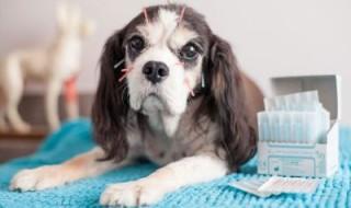 Εκπαίδευση στον κτηνιατρικό βελονισμό 400