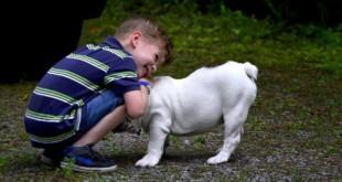 -από-σκύλο-στον-άνθρωπο-slider-528x263