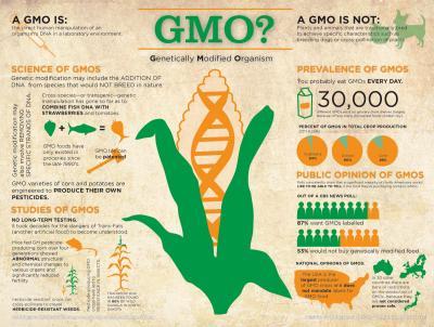 τρόφιμα από γενετικώς τροποποιημένους οργανισμούς