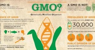 GMOs-slider-660x330