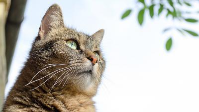 βιταμίνη D γάτα 400