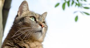βιταμίνη D γάτα slider