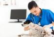 Εργασία Κτηνιάτρων στη Μ. Βρετανία slider