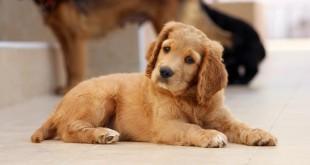dog-785193_1280(2)